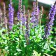 宿根草で彩る理想の庭造りに挑戦!!ついでに雑草対策も